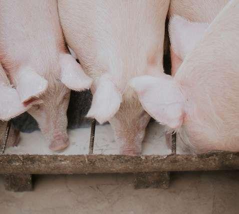 Antibióticos Animales